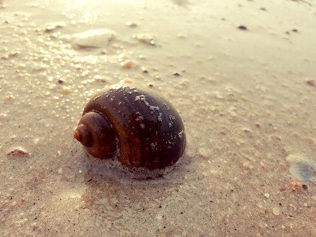ビーチの砂の背景に海のカタツムリ