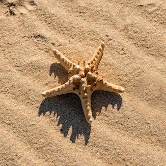 Sea star on sand