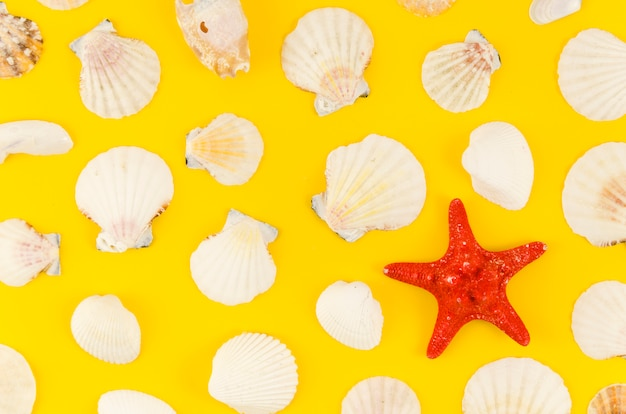 Sea star with many shells on table