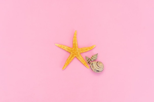 Sea starfish isolated on a pink background