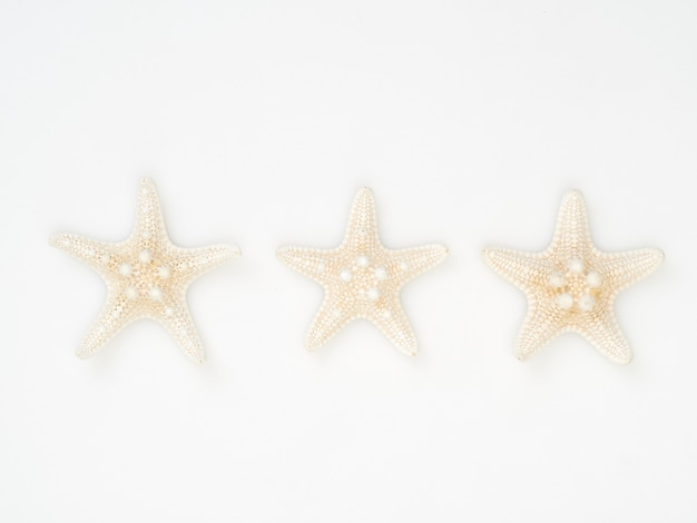 Sea starfish placed separately on a white background, space for texting, top view