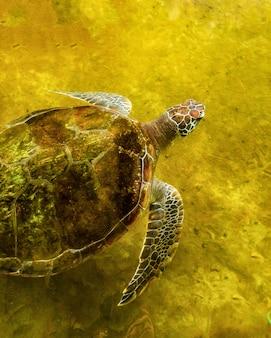 복구 연못에 바다 거북 바다로 돌아 오기를 기다리는 중