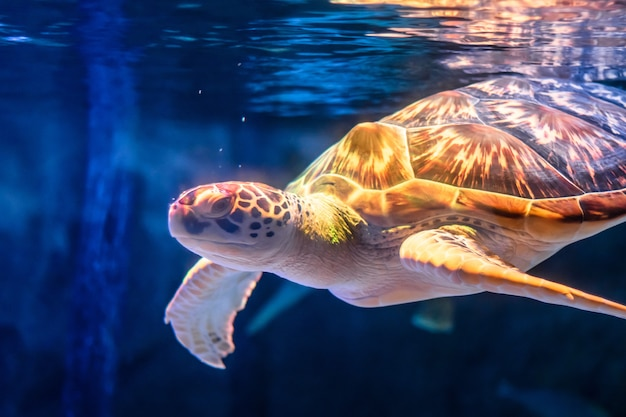 Sea turtle swimming in underwater background.