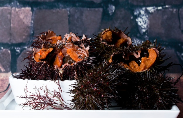 sea urchin decor.htm sea urchin free icon  sea urchin free icon