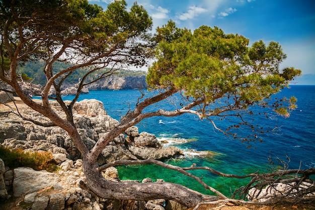 松と岩の多い海岸線と海の景色