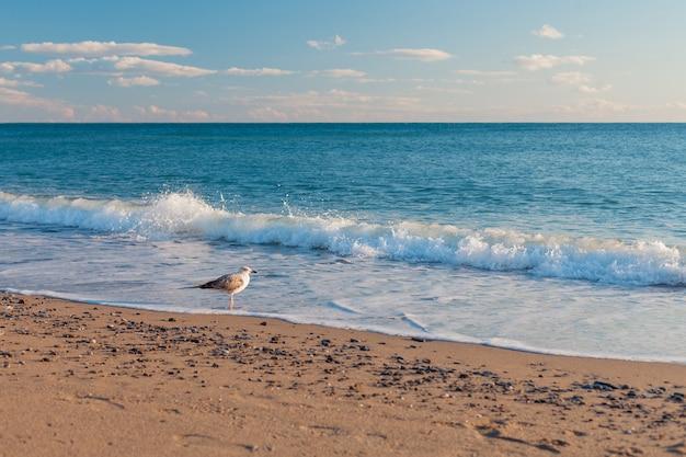 Морские волны ударяются о песчаный берег