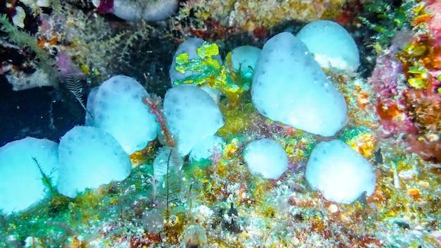 바다의 하얀 스펀지 수중, 몰디브.
