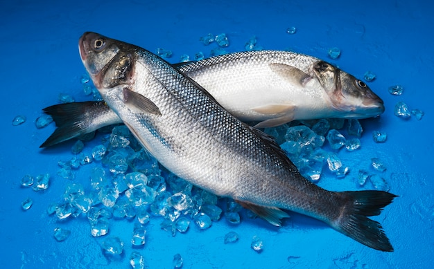 Сибас рыба на льду на синем