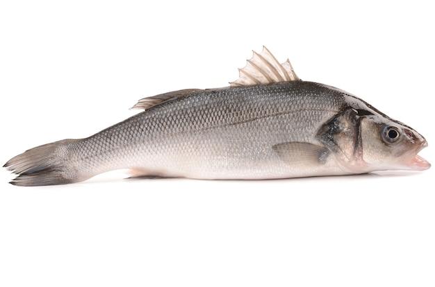 Seabass 흰색 절연