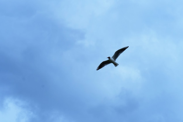 Seagull against a blue sky with clouds