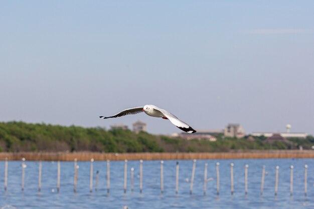 Чайка летит над озером