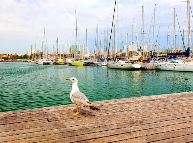 Чайка на деревянном пирсе на фоне яхты