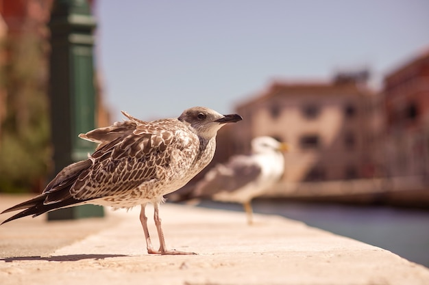 Seagull on the bank of a canal in venice on a hot sunny day, italy