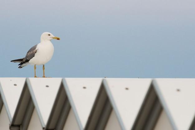 Seagull on beach cabana