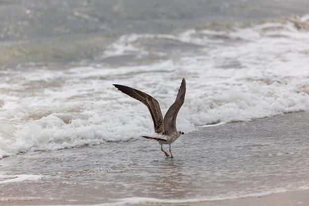 Seagull on the beach in flight