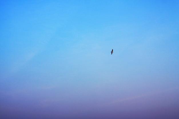 Seagull bird flying on the blue sky