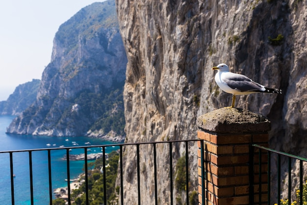 A seagull bird sits on a balcony against the background of the sea and rocks