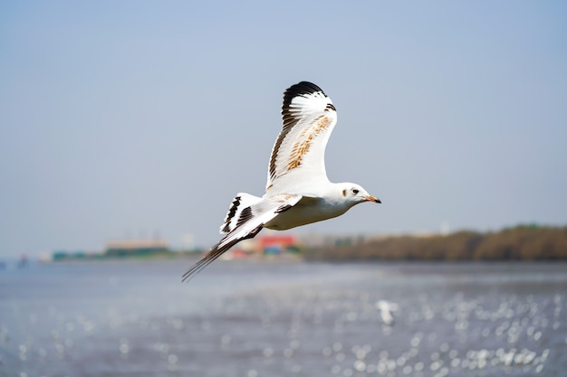 The seagull birds on beach and mangrove forest in thailand country.