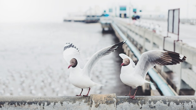 Seagull birds on the bridge by the sea background.
