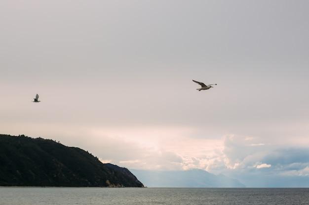 Seagull blue skye