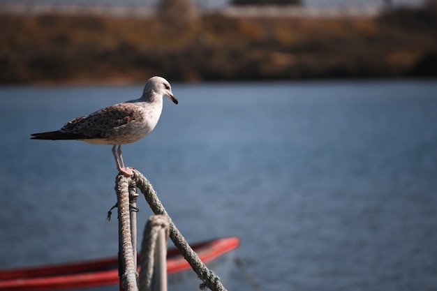 Seagull between boats on the water