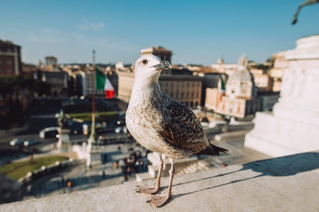 Seagull in central italy near piazza venezia