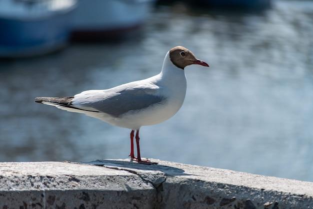 Seagull on concrete pier