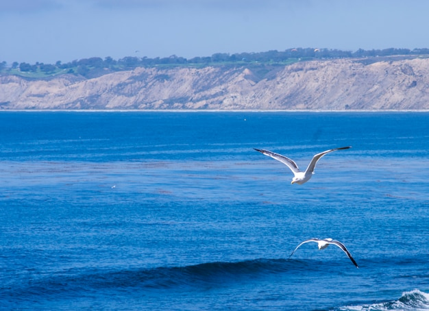 Seagull couple flying above the ocean