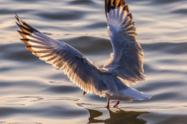 Seagull and evening light