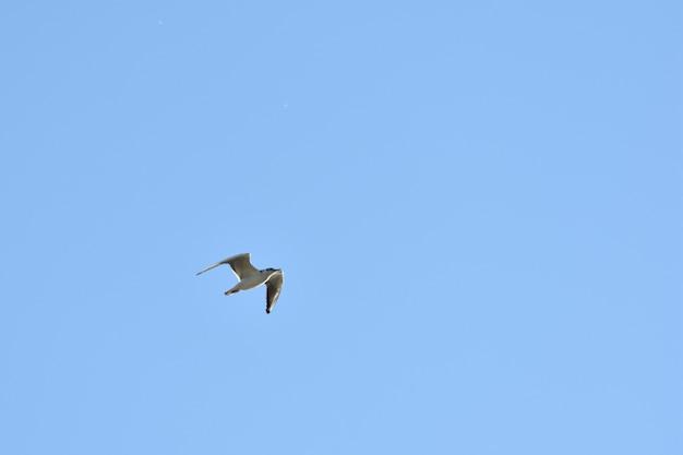 カモメは青い空を横切って飛ぶ
