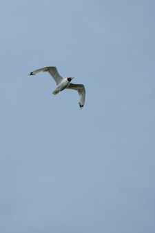 カモメが空を横切って飛ぶ
