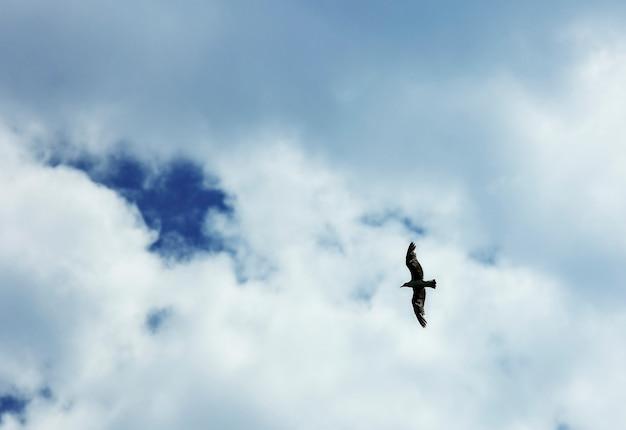 カモメが空を飛ぶハエ