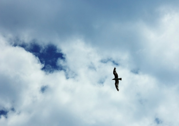 Seagull flies in the sky fly