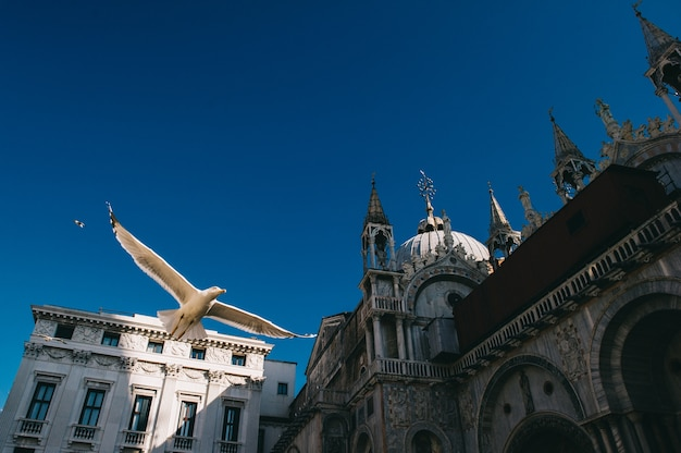 Seagull in flight on san marco square italy. view from below