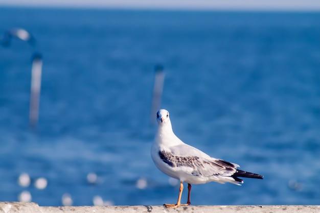 Полет чайки, морская птица летит через голубое небо голубое море белый яркий тон природа может уйти от повседневной жизни, живя, путешествовать, морской пейзаж, размыть фон в голубых тонах
