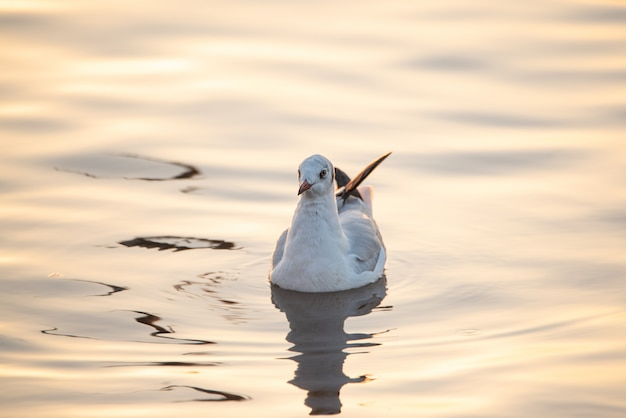 Seagull floating in water with reflection.