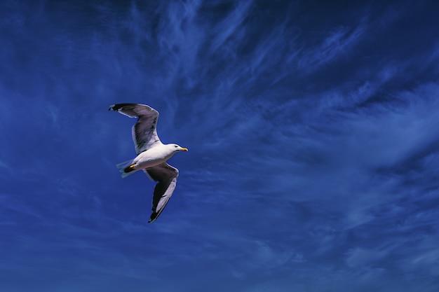 갈매기는 푸른 극적인 하늘을 배경으로 자유롭게 날아갑니다.