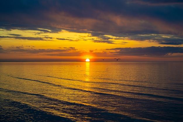 갈매기는 일몰에 구름과 다채로운 바다에 물 위에 낮은 비행