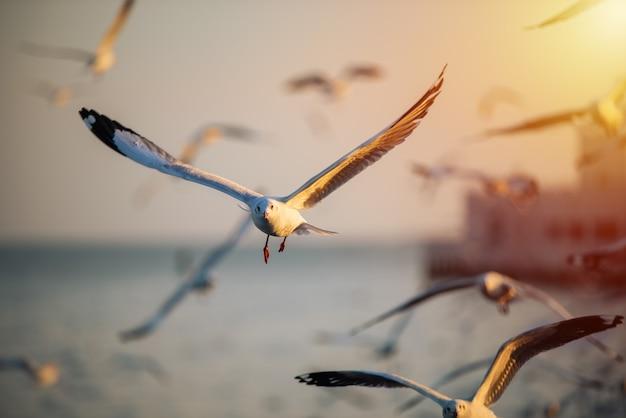 Seagull fly on sky