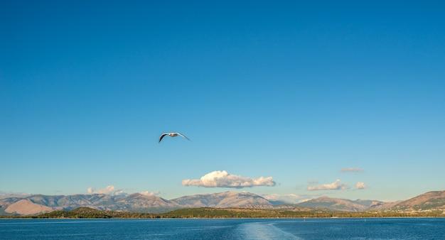 Чайка летит над ионическим морем.