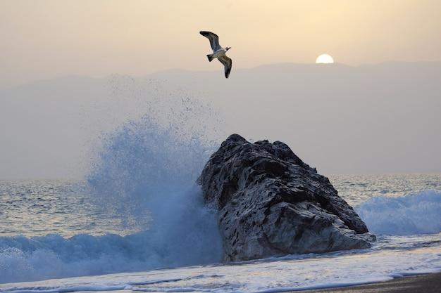 파도와 일몰에 대하여 비행하는 갈매기
