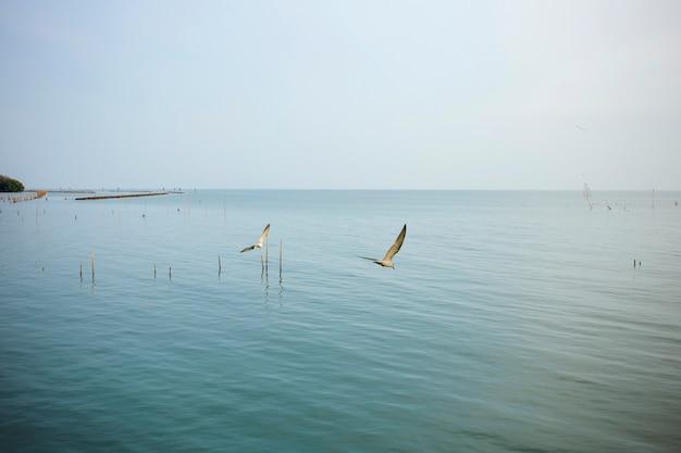 マングローブ林で海を飛んでいるカモメ