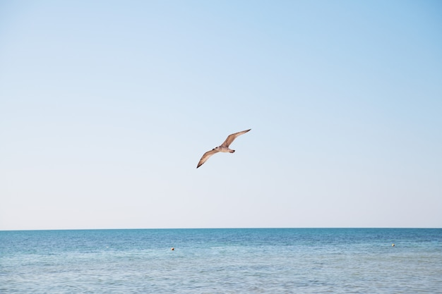 Seagull flying over the blue sea.