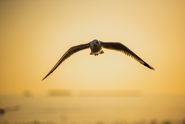 Seagull flying in blue sky over the sea at sunset.