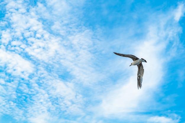 Чайка, летящая в голубом небе.
