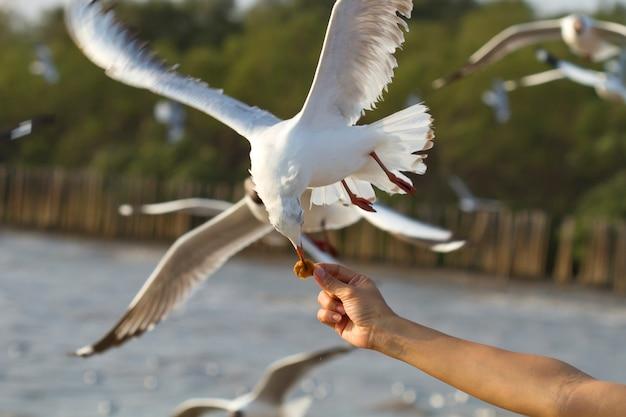 Чайка, летящая в море