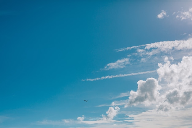 Чайка летит в небе