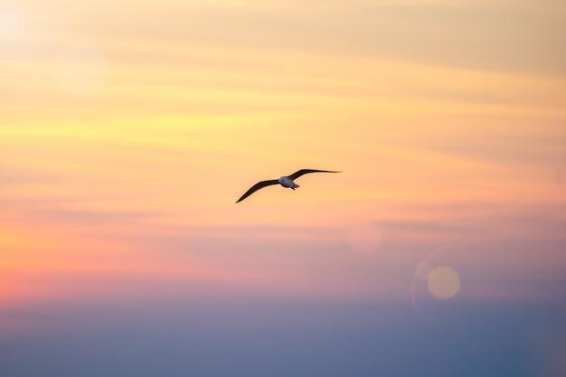 空を飛んでいるカモメ。