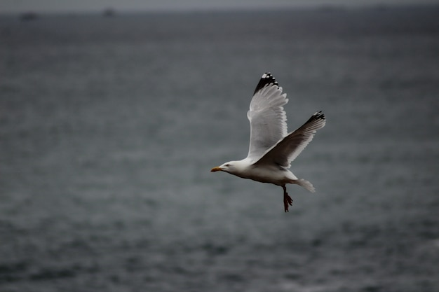 Seagull flying low over the sea level