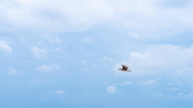 Чайка летит на голубом облачном небе